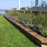 Beach Landscape Design - The Benefits of Using Native Plants